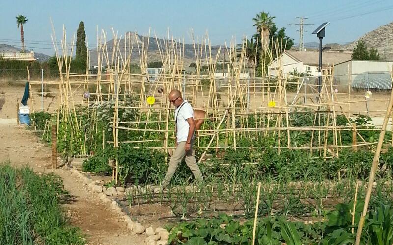 Photo of #Aspe recibirá ayudas de la Diputación para inversiones en huertos urbanos