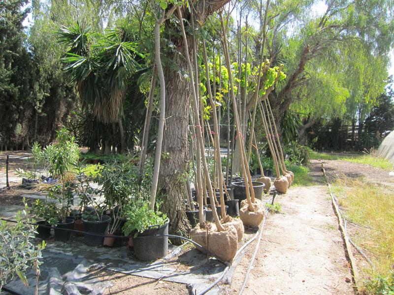 Parque y jardines de novelda recibe la donaci n de for Decoracion de parques y jardines