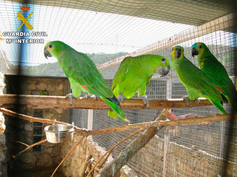 Photo of #Comarca: Incautan 75 aves exóticas en Elche y Hondón de los Frailes