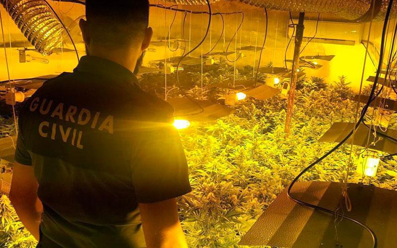 Photo of #Hondón: Descubren una plantación indoor de marihuana tras un armario ropero