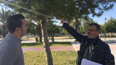 Photo of #Elda: Mantenimiento comienza la campaña preventiva contra la procesionaria en Elda