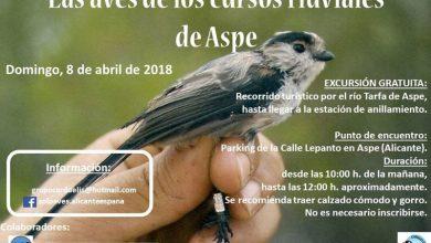 Photo of #Aspe: Nueva jornada de anillamiento de aves en el río Tarafa