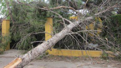 Photo of #Novelda: 45 minutos de viento huracanado