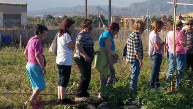 Photo of #Aspe: Organiza una visita a los Huertos Ecológicos Municipales para los mayores
