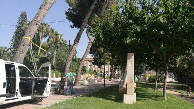 Photo of #Novelda: Talan cuatro pinos en el Paseo de Los Molinos por su peligrosidad