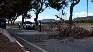 Photo of Aspe: La caída de un árbol por el viento ralentiza el tráfico en la carretera de Novelda