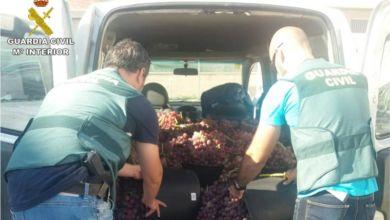 Photo of #Comarca: Detienen a 5 personas por robos en Novelda, Monforte, Petrer y Sax