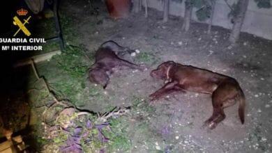 Photo of #Comarca: Abaten a un agresivo Pit Bull que había matado a otro perro