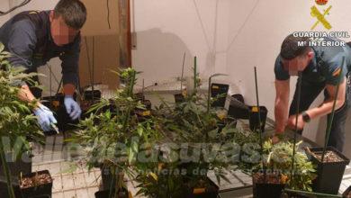Photo of #Monóvar: Desmantelan un cultivo indoor de marihuana ubicado en un domicilio