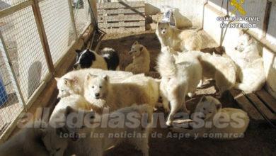 Photo of #Comarca: Investigan a una asociación de animales por un posible delito de maltrato