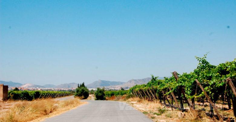 Photo of #Monforte: Agricultura comienza el servicio de desbrozamiento de caminos