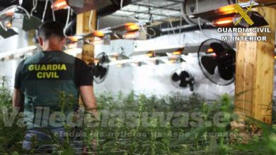 Photo of #Comarca: Desarticulan una organización criminal dedicada al tráfico de marihuana