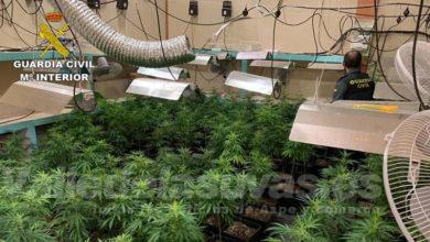Photo of #Monóvar: Desmantelan una plantación indoor de marihuana con más de 300 plantas