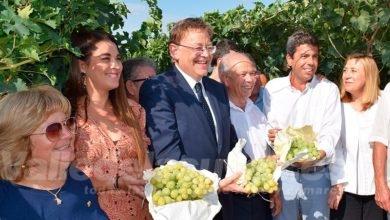 Photo of #Comarca: Ximo Puig acude a la presentación de la campaña de la uva de mesa