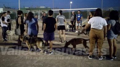 Photo of #Aspe: Más de 20 participantes inician los cursos de educación canina