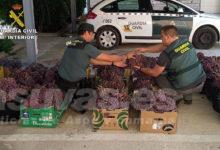 Photo of #Monforte: Recuperan más de una tonelada y media de uva de mesa robada