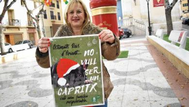 Photo of #Petrer lanza una campaña para sensibilizar sobre el abandono de mascotas en Navidad