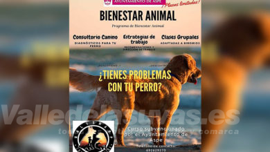 Photo of #Aspe: Abren el plazo para un curso de Bienestar Animal para perros