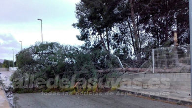 Photo of #Novelda: Cae un árbol por las rachas de viento