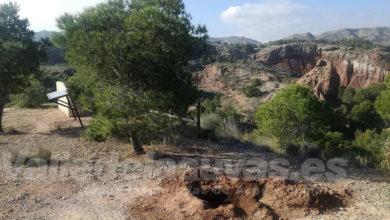 Photo of #Aspe: Roban dos algarrobos recién plantados en el paraje de Los Algezares