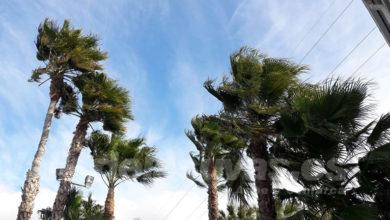 Photo of #Aspe: El alcalde ordena el cierre de parques y jardines por las fuertes rachas de viento