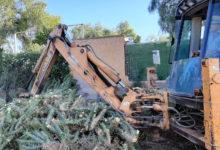 Photo of #Novelda: Medio Ambiente retira más de 10 toneladas de cactus Cylindropuntia del cauce del río