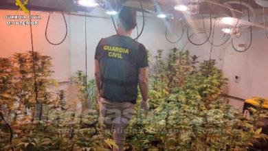 Photo of #Comarca: La Guardia Civil desmantela una plantación de marihuana en Hondón de los Frailes