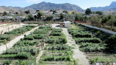 Photo of #Aspe recibirá una subvencion de 7.750 euros para los huertos urbanos