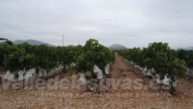 Photo of #Aspe: Los agricultores pueden depositar los bolsos de la uva en el Punto Limpio