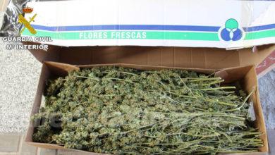 Photo of #Novelda: Interceptan en la autovía un transporte con cerca de 100 kilos de marihuana