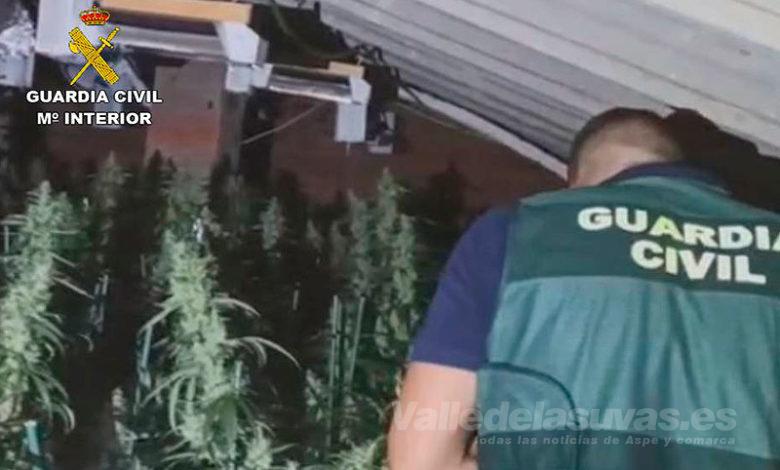 Photo of #Aspe: La Guardia Civil desmantela una plantación de marihuana en Aspe