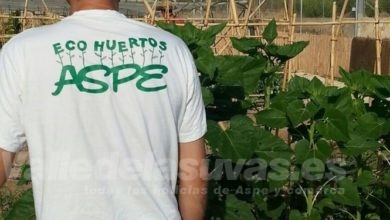 Huerto Aspe