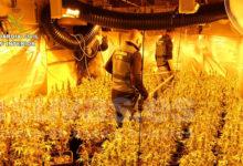 Plantación marihuana Novelda